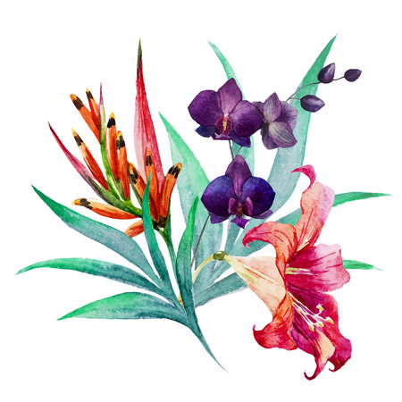 jardines flores: Imagen hermosa del vector con un bonito ramo de la acuarela tropical Vectores