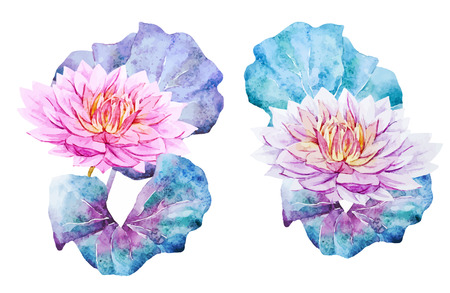 lotus leaf: Beautiful vector image with watercolor lotus flowers
