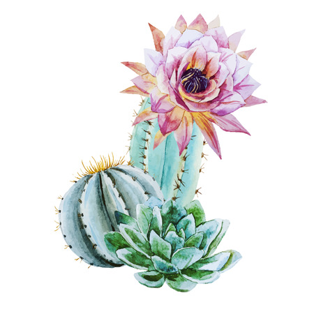 watercolour: Beautiful vector image with nice watercolor cactus
