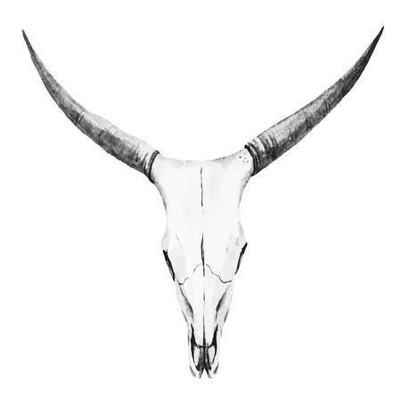 toro: Imagen hermosa del vector con el cráneo bonita acuarela Vectores
