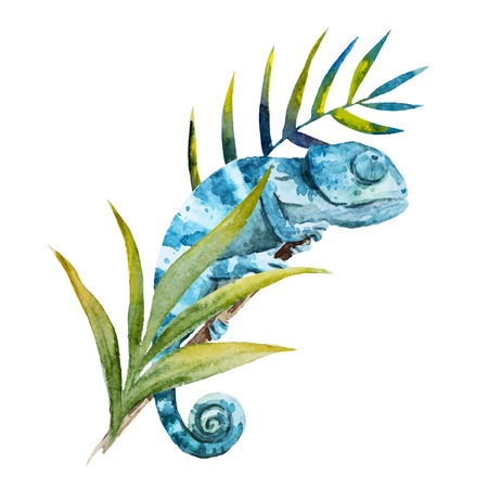 lizard: Beautiful image with nice watercolor chameleon Illustration