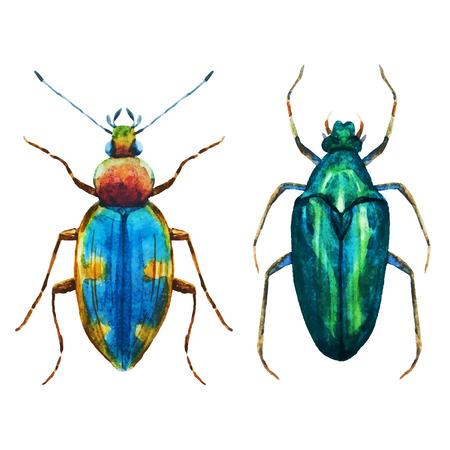 Schönes Bild mit schönen Aquarell hören Käfer