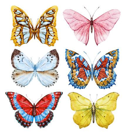 Belle image avec de beaux papillons d'aquarelle Banque d'images - 40001627