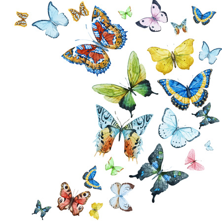 botanical: Beautiful image with nice watercolor butterflies