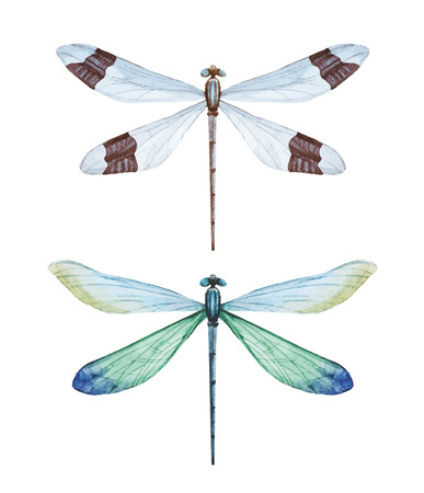 Beautiful image with nice watercolor dragonflies