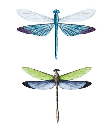 Beautiful  image with nice watercolor dragonflies Ilustrace