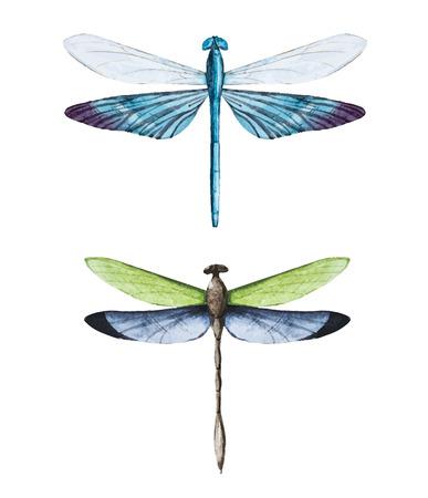 Schönes Bild mit schönen Aquarell Libellen Standard-Bild - 40001584