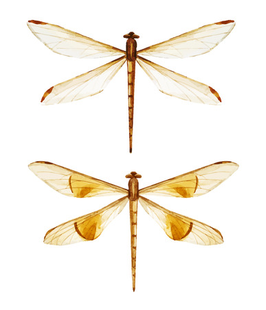 dragonfly wings: Beautiful vector image with nice watercolor dragonflies Illustration