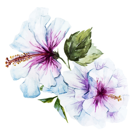 Hermosa imagen con buena acuarela de la flor del hibisco Foto de archivo - 40460371