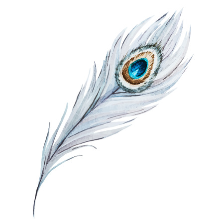 Beautiful vector image with nice watercolor peacock feather Illustration