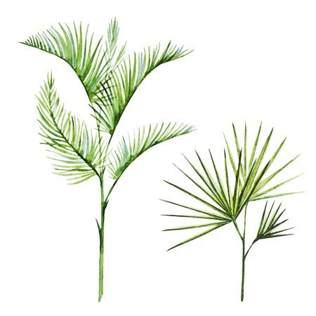 palms: Imagen hermosa del vector con plantas tropicales bonita acuarela