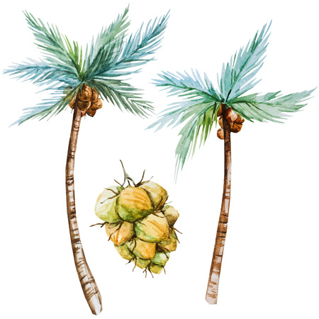 coconut water: Beautiful vector image with nice watercolor palms