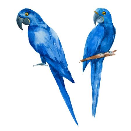 animales de la selva: Imagen hermosa del vector con buena acuarela loros azules
