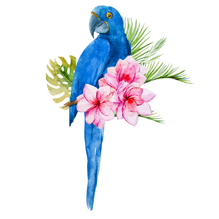 macaw parrot: Beautiful vector image with nice watercolor blue parrots