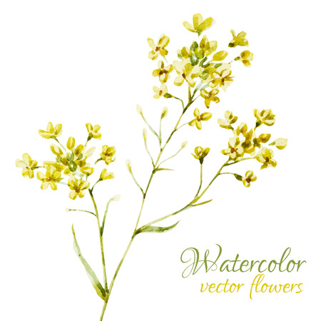 Schöne Vektor-Bild mit schönen Aquarellblumen Standard-Bild - 41907324