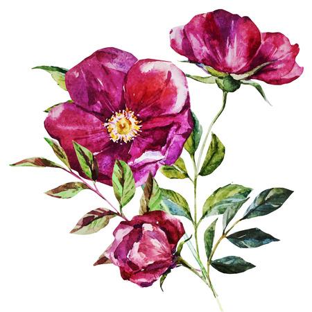 aquarelle: Belle image vectorielle avec des fleurs à l'aquarelle belles