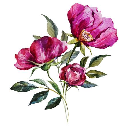 rosas blancas: Imagen hermosa del vector con bonitas flores de la acuarela Vectores