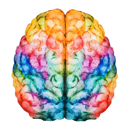 humans: Beautiful vector image with nice watercolor brain
