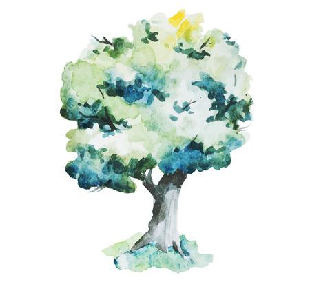 arbol roble: Imagen hermosa del vector con bonitos árboles acuarela
