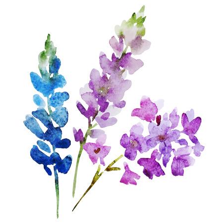 flor violeta: Imagen hermosa con bonitas flores de la acuarela Vectores