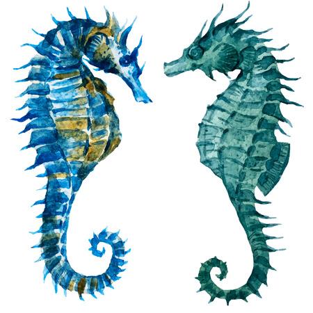 caballo de mar: Imagen hermosa con bonitas caballitos de mar acuarela