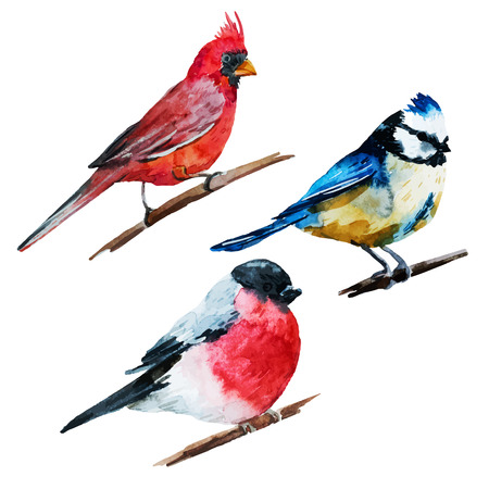 birds in tree: Beautiful image with nice watercolor birds Illustration
