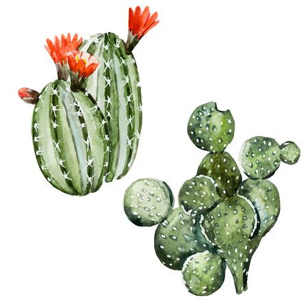 Hermosa imagen con un bonito cactus acuarela Foto de archivo - 42714264
