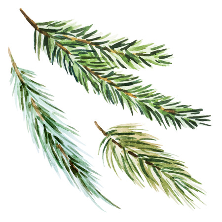 branch: Beautiful image with nice watercolor fir-tree branch Illustration