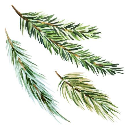 branch: Belle image avec une belle aquarelle sapin branche