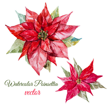 Beautiful image with nice watercolor poinsettia flower