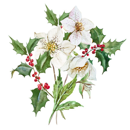 christmas watercolor: Beautiful image with nice watercolor christmas flowers Illustration