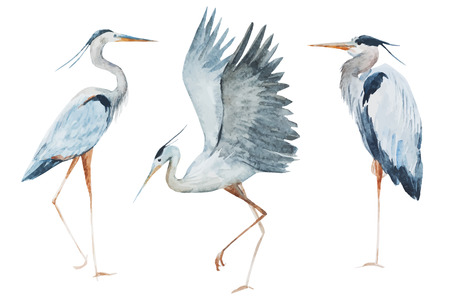 fly: Beautiful image with nice watercolor heron birds