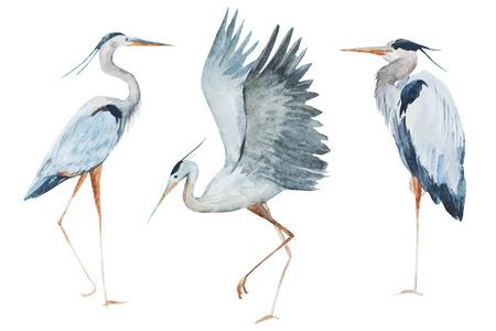 Schönes Bild mit schönen Aquarell Reiher Vögel