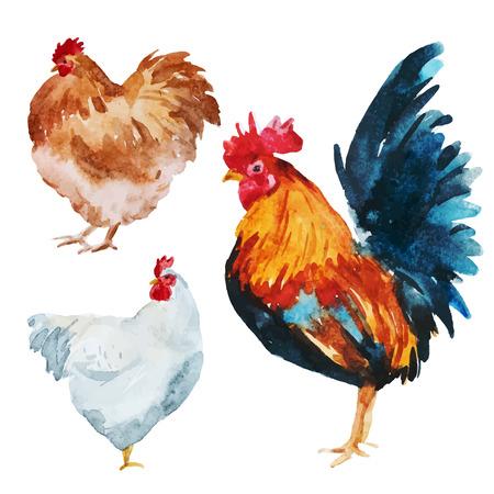 gallo: Hermosa imagen con buen pollo acuarela Vectores