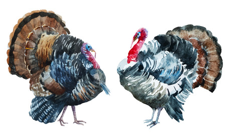 Beautiful image with nice watercolor turkey Ilustracja
