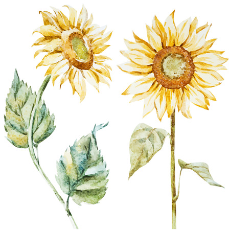 Beautiful image with nice watercolor sunflowers Çizim