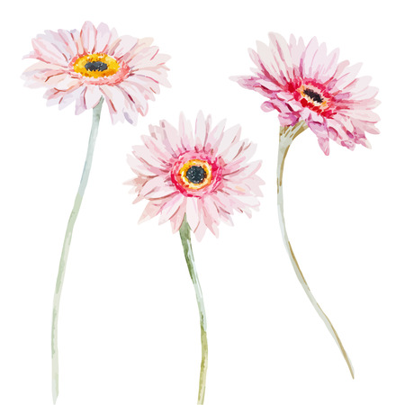 daisy pink: Beautiful image with nice watercolor flowers