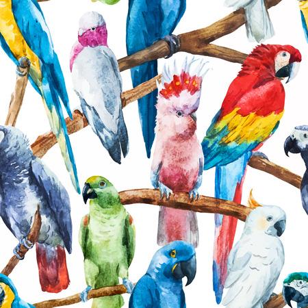aves: Imagen hermosa del vector con bonitos loros acuarela Vectores