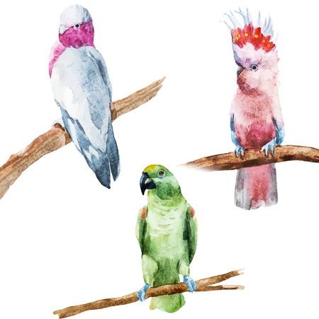 좋은 수채화 앵무새와 함께 아름 다운 벡터 이미지
