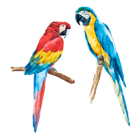 Belle image vectorielle avec jolie perroquet d'aquarelle Banque d'images - 44371331