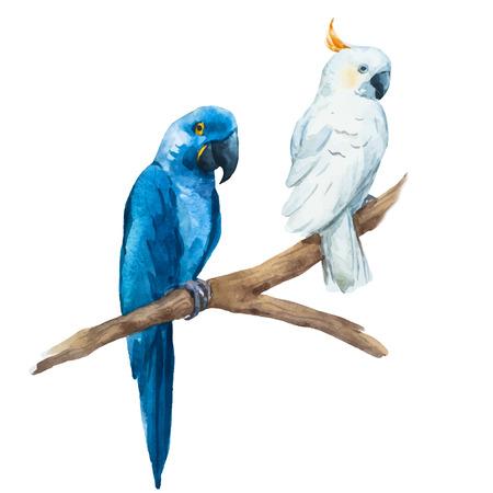 papagayo: Imagen hermosa del vector con buen loro acuarela