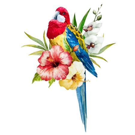 Beautiful vector image with nice watercolor rosella bird 일러스트