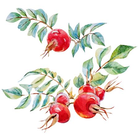 Mooie vector afbeelding met mooie aquarel dogrose bloemen