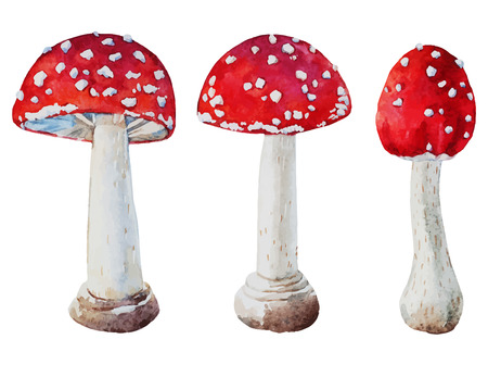 Beautiful vector image with nice watercolor amanita mushrooms Çizim