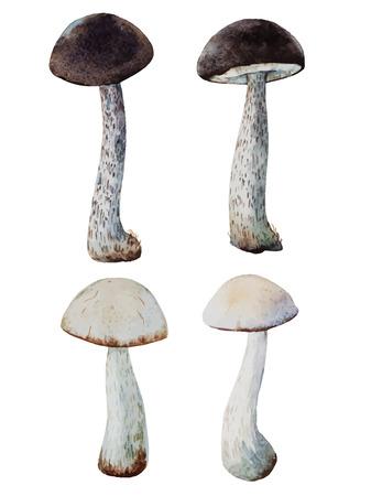 champignon: Beautiful vector image with nice watercolor mushrooms
