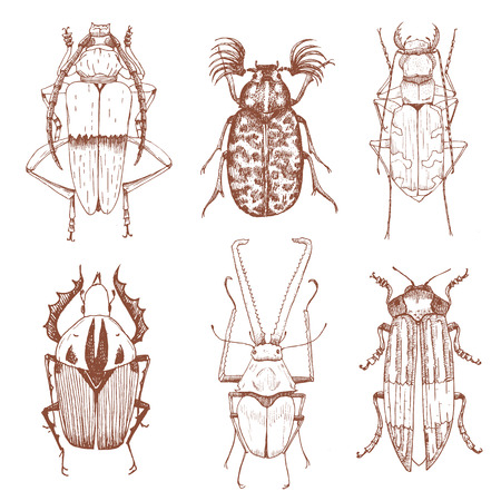 beetles: Beautiful vector image with nice hand drawn beetles