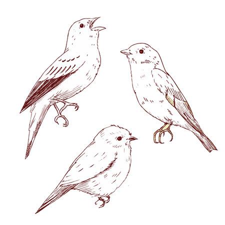chickadee: Beautiful vector image with nice hand drawn birds