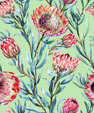 protea flower: Beautiful vector pattern with nice watercolor tropical protea flower