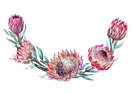 素敵な水彩画熱帯プロテア花輪と美しいベクトル画像  イラスト・ベクター素材