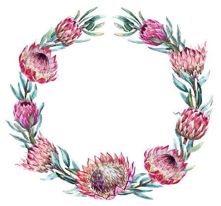 Beautiful vector image with nice watercolor tropical protea wreath Illusztráció